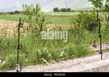 Original Barbed wire fence stakes from Austro-Hungarian War near Borove Albania - Stock Image