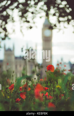 A small field of poppies with the Houses of Parliament in the background - Stock Image
