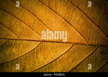 Very nice colored background from autumn leaves. - Stock Image