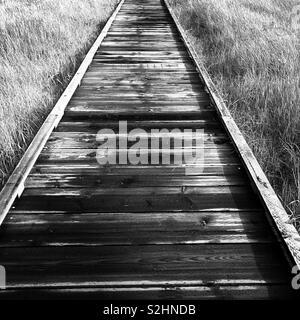 A wooden walkway surrounded by grass. - Stock Image