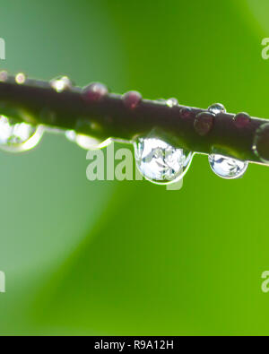 Dew in the fresh morning - Stock Image