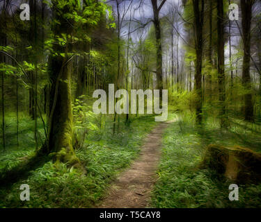 DIGITAL ART: The Path to Enlightenment (Forest at Lenggries, Bavaria, Germany) - Stock Image