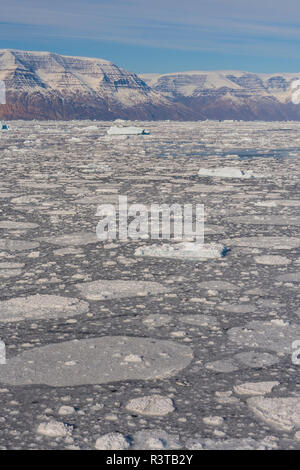 Greenland. Scoresby Sund. Gasefjord. Pancake ice forming in a bay full of brash ice. - Stock Image