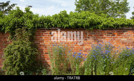 Walled garden, bright sun - Stock Image