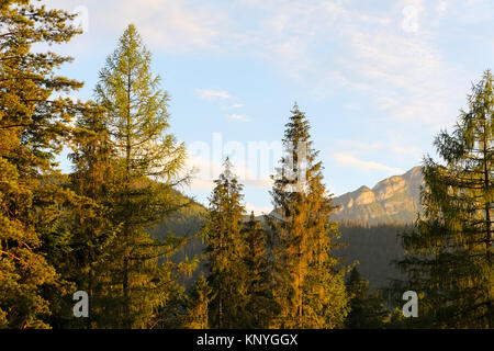 The view of the Tatra landscape with its magnificent trees and mountains is seen from Zakopane. - Stock Image