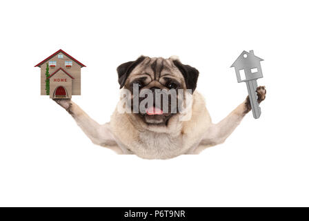smiling happy pug puppy dog holding up house key and miniature house, isolated on white background - Stock Image