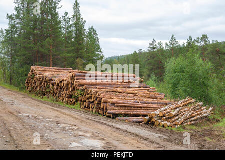 Pile of cutted lumber by a gravel road - Stock Image