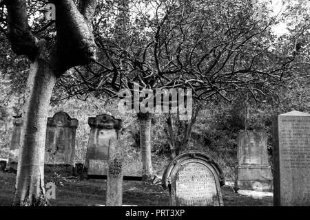 Spooky tree - Stock Image