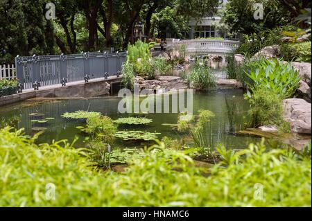 Fish pond in Hong Kong Park, Central District, Hong Kong Island - Stock Image