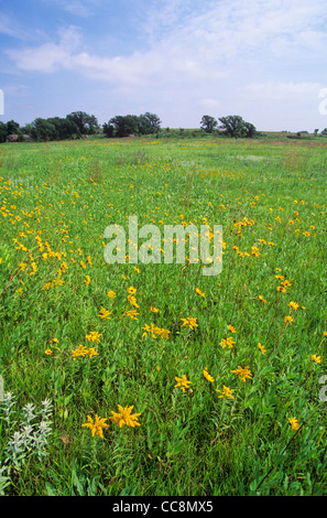 Tallgrass prairie with sunflowers and other wildflowers at Pipestone National Monument, Minnesota, AGPix_0645 - Stock Image