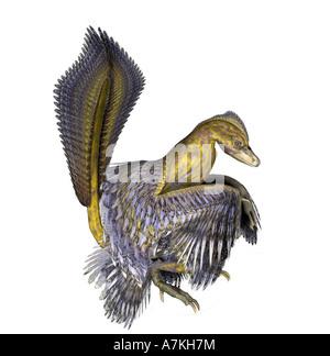 Microraptor  dinosaur - Stock Image