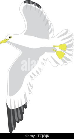 Seagull flying - Stock Image