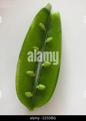 Inside of snow pea - Stock Image