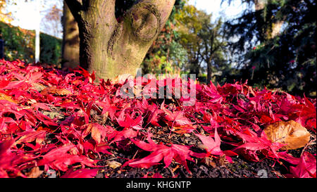 Ashbourne Park, Derbybshire, UK. 17th November, 2017. UK Weather bright colourful autumn day in Ashbourne Park, - Stock Image