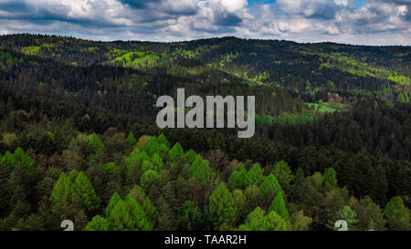 Pieniny mountains peaks covered in green forest at summer day, aerial view. - Stock Image