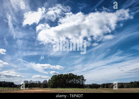 Germany, Schorfheide Game Reserve, Wildpark Schorfheide, Big Blue sky in Wildlife park for local fauna & domestic animals under threat of extinction - Stock Image