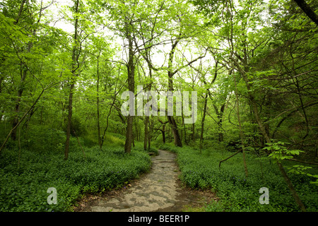 A view of a natural stone pathway at the Tanyard Creek Walking Trail in Bella Vista, Ark. - Stock Image