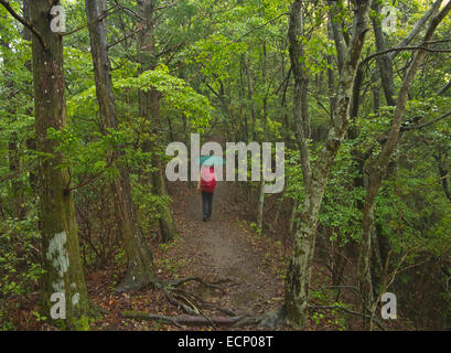 Walking trail in Kii Mountain Range, Kumano Kodo Pilgrimage Trail, above Takijiri-oji, Kii Peninsula, Wakayama Prefecture, - Stock Image