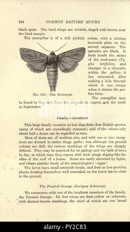 Butterflies and moths (British) (Page 244) - Stock Image