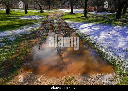 snow, mud and slush on the lawn in a park - Stock Image