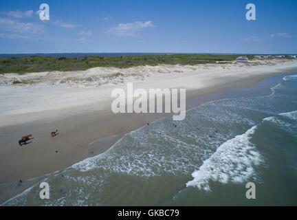 Aerial of wild horses on the beach in North Carolina - Stock Image