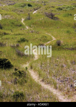 Trail leading to the beach at Ocen Shores Washington State USA 2003 - Stock Image