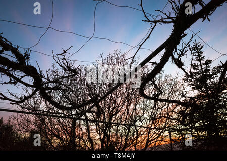 Las Alpujarras, Granada province, Andalusia, Spain : Low angle at sunset of a vine at the yard of a cortijo traditional Andalusian farmhouse. - Stock Image