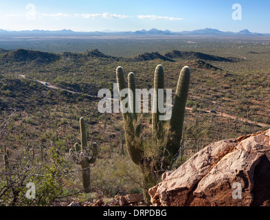 A view of Saguaro West National Park in Tucson Arizona from atop a hill. - Stock Image