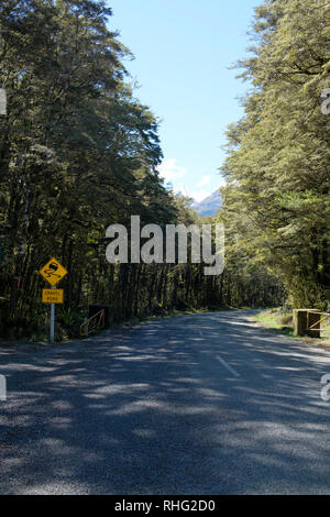 Start of a gravel road in Fjordland National Park, New Zealand. - Stock Image