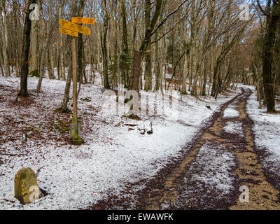 A track, running through snowy woods in Switzerland, with signpost and milestone (bottom left) - Stock Image