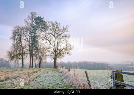 A small copse of trees on a Derbyshire hillside near Melbourne. - Stock Image