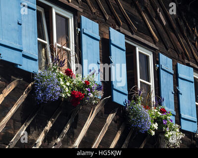 Traditional windows of wooden alp guesthouse, decorated, flowers, Kleinwalsertal, Austria - Stock Image