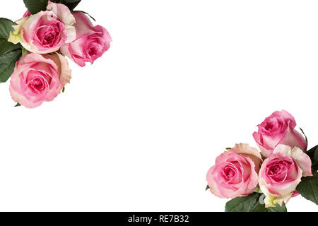 Beautiful pink and white rose flowers with leaves isolated over a white background in a frame. - Stock Image