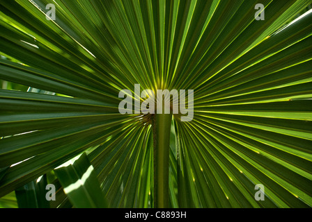 Plant Leaf - Stock Image