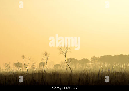 landscape of forest burned by fire in dante's beach, italy - Stock Image