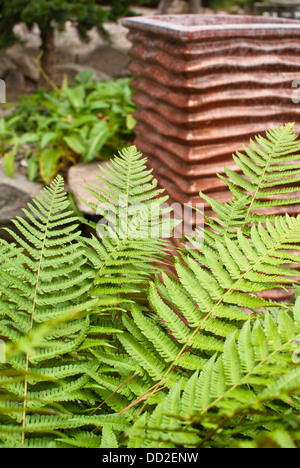Lush ferns grow in front of a sculpture at Koi Gardens, Spokane, Washington State, USA. - Stock Image