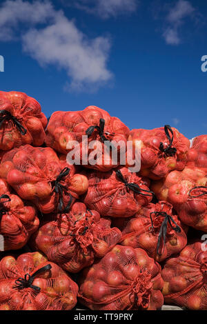 Harvested apples in fishnet bags - Stock Image