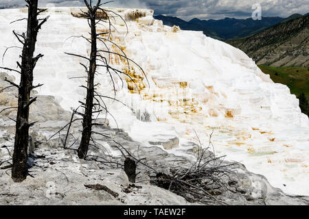 Dead trees in limestone rock formations at Mammoth Hot Springs in Yellowstone National Park in Wyoming, USA - Stock Image