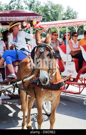 Horse-drawn carriage in New Orleans, French Quarter District. Louisiana - Stock Image