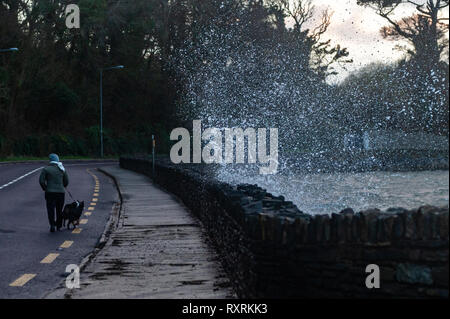 Bantry, West Cork, Ireland. 10th March, 2019.  A woman walking her dog tries to avoid the waves crashing onto the footpath along Bantry Sea Front.  Winds are currently reaching speeds of 47 KM/H with gusts up to 80 KM/H. Credit: Andy Gibson/Alamy Live News - Stock Image