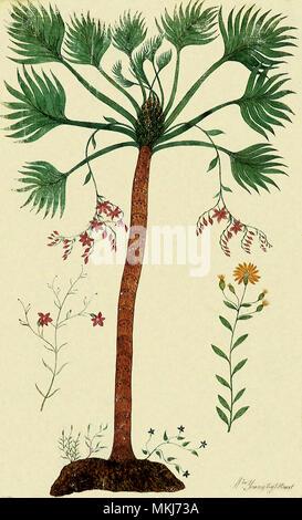 Botanical Tree, Flowers - Stock Image