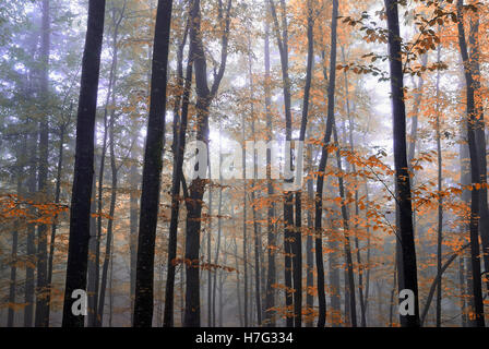 colored trees in the wood in autumn - Stock Image