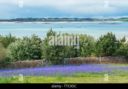 Looking across to Tresco from St Martins, Isles of Scilly, West of England, UK - Stock Image