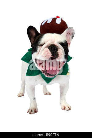 A French Bulldog showing some festive cheer by wearing a Christmas pudding - Stock Image