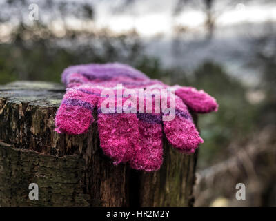 Lost  glove in the forest - Stock Image