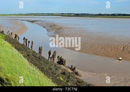 The Hen Reedbeds, Southwold, Suffolk, UK - Stock Image