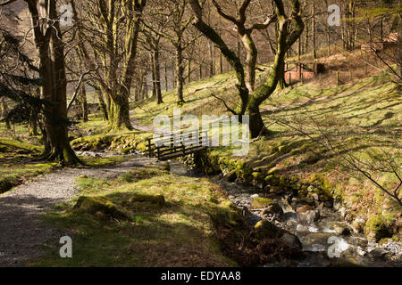 UK, Cumbria, Lake District, Buttermere, Hassnesshow Beck passing through woodland at Hassness - Stock Image