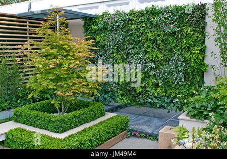 A small urban environmental Eco garden with a living plant wall - Stock Image