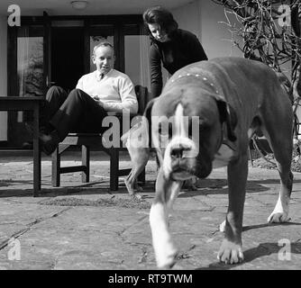 John Surtees with wife and pets Boxer dogs 1966 - Stock Image