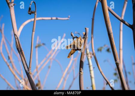 Photo of castor plant - Stock Image